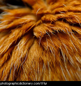 Photo of cat fur