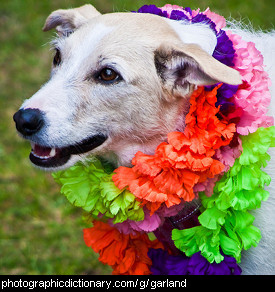 Photo of a dog wearing garlands