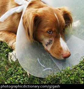Photo of a wounded dog
