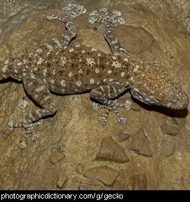 Photo of a gecko