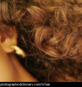 Photo of a woman's hair