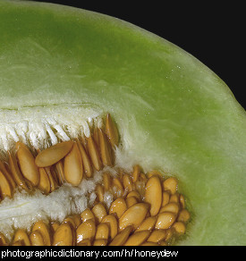 Photo of a honeydew melon