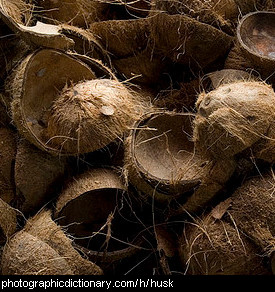 Photo of coconut husks.