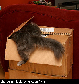 Photo of a cat going into a box