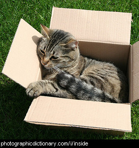 Photo of a cat inside a box.