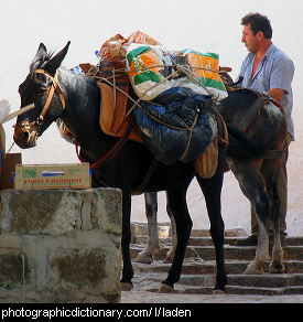 Photo of a laden donkey