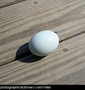 Photo of a freshly laid egg