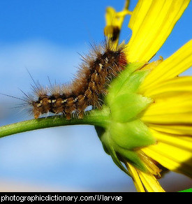 Photo of a caterpillar