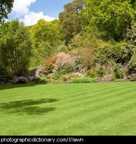 Photo of a lawn