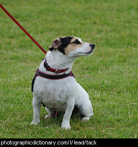 Photo of a dog on a lead
