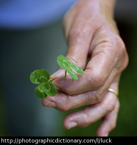 Photo of four leaf clovers