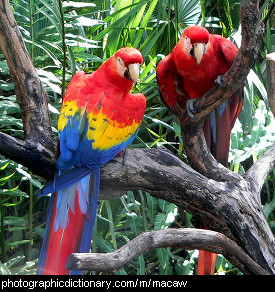 Photo of macaws