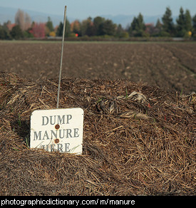 Photo of a pile of manure