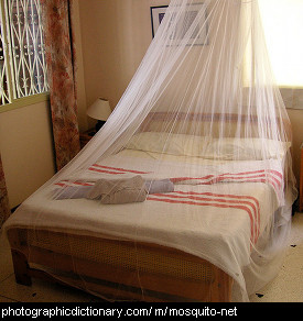 Photo of a mosquito net