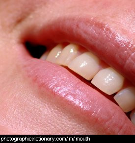 Photo of a mouth