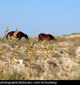 Photo of wild mustangs