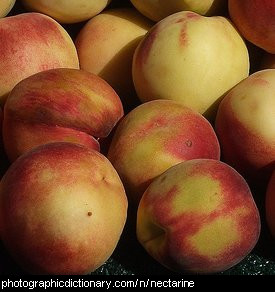 Photo of nectarines