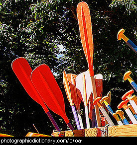 Photo of some oars