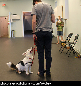 Photo of a dog at obedience classes