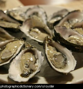 Photo of some oysters in the shell