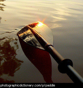 Photo of a paddle