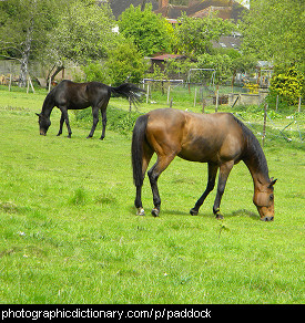 Photo of horses in a paddock.