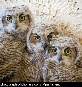 Photo of a group of owls