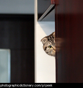 Photo of a cat peeking