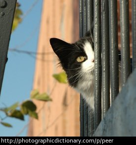 A cat peering out