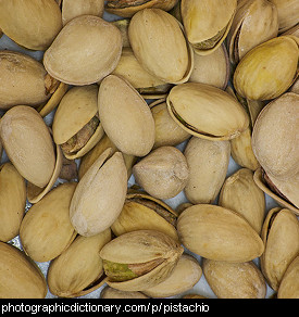 Photo of pistachio nuts