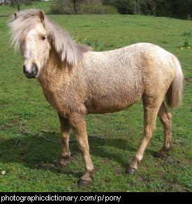 Photo of a pony