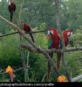Photo of a group of parrots