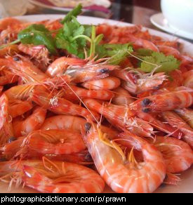 Photo of  prawns