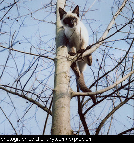 Photo of a cat stuck up a tree