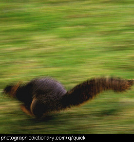 Photo of a squirrel running