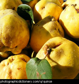 Photo of ripe quinces