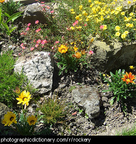 Photo of a rockery