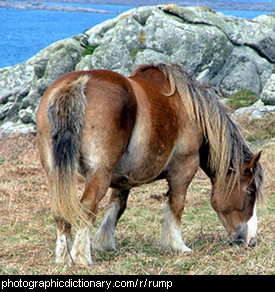 Photo of a horse's rump