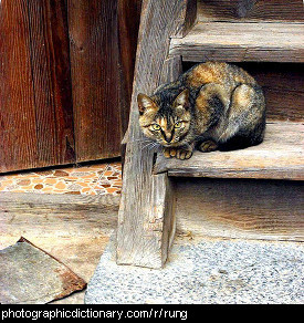 Photo of a cat on the rung of a ladder.