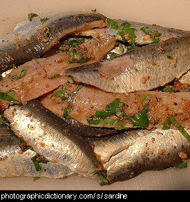 Photo of some sardines
