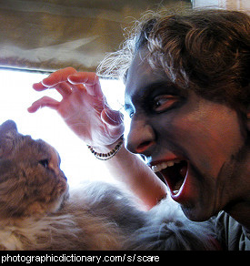 Photo of someone scaring a cat