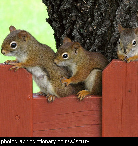 Photo of a group of squirrels
