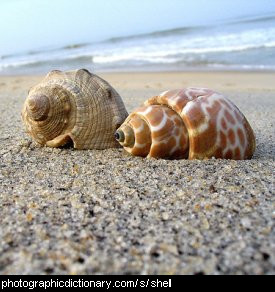 Photo of shells on the beach