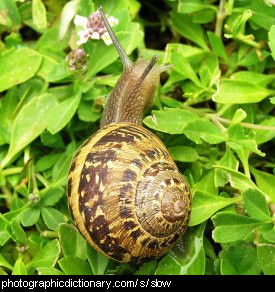 Photo of a slow-moving snail