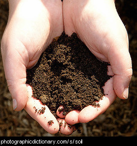Photo of hands holding soil.