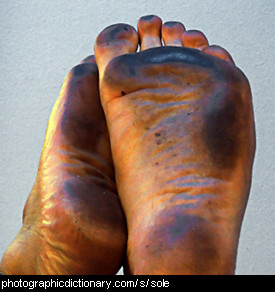 Photo of the soles of some feet.