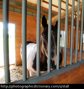 A horse in a stall.