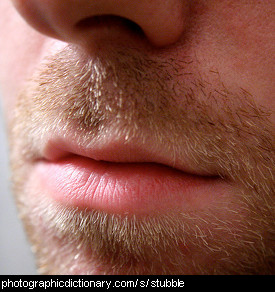 Photo of a man with stubble
