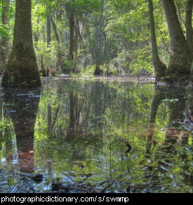 Photo of a swamp