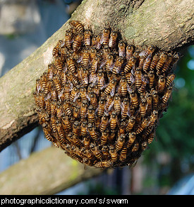 Photo of a swarm of bees